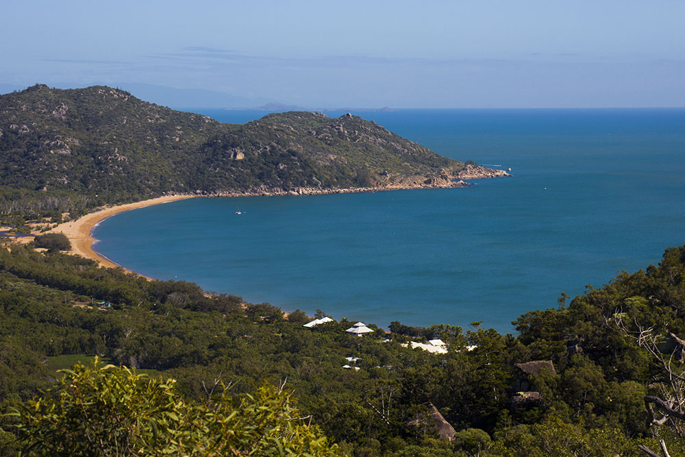 The Forts Walk – det bedste sted at se vilde koalaer i Australien!
