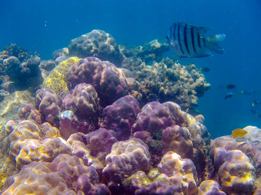Snorkeling på Great Barrier Reef, verdens største koralrev