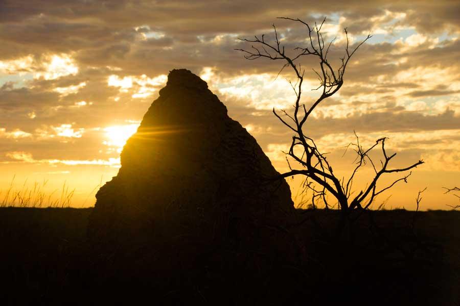 termitbo i vestaustralien