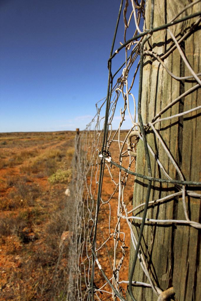 the dog fence, Australien