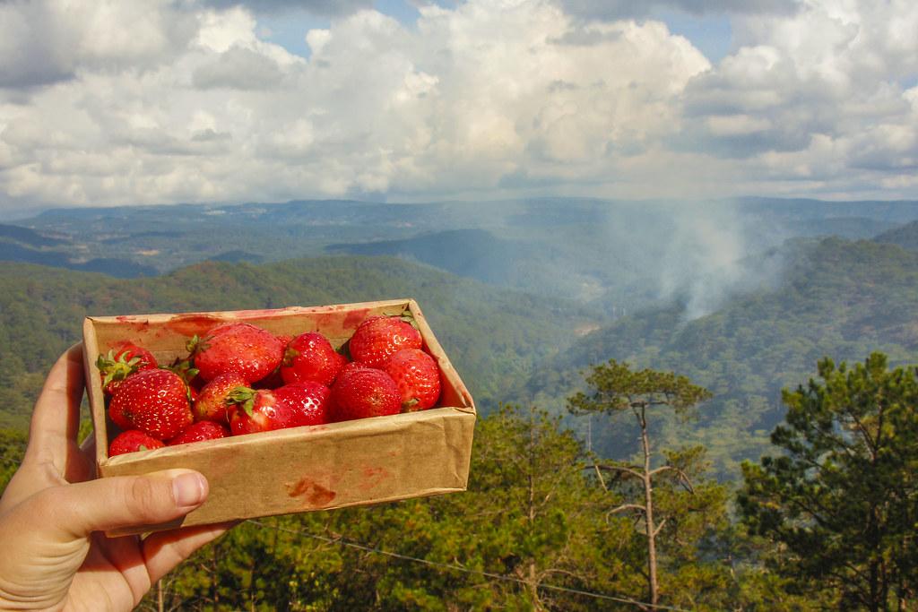 jordbær i dalat