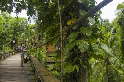 Rejseblog: Fem favoritoplevelser i Ubud, Bali