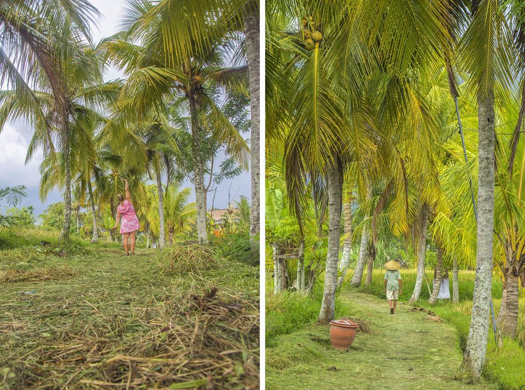 vandring i rismarker