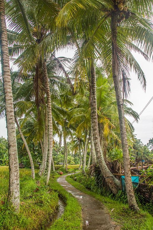 palmer på bali