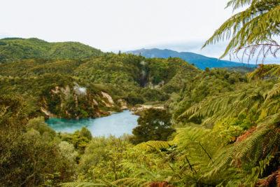 Rejseblog: Termale kilder i Waimangu Volcanic Valley, New Zealand