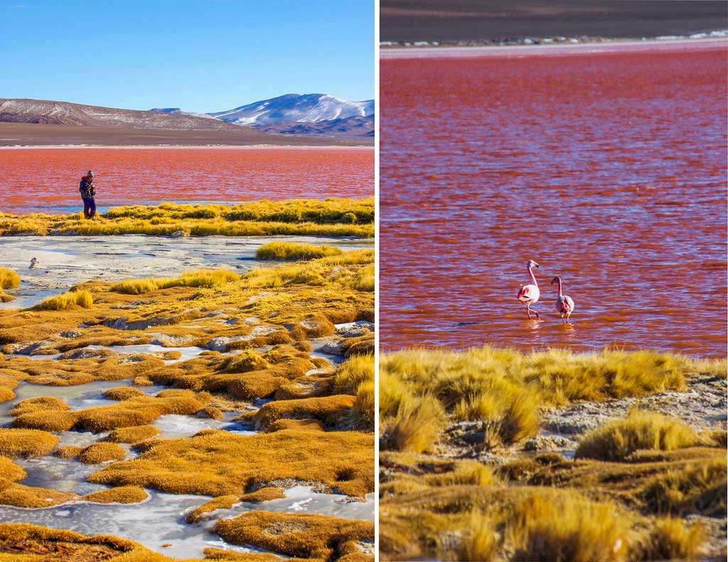 flamingoer i Laguna Colorada, Bolivia