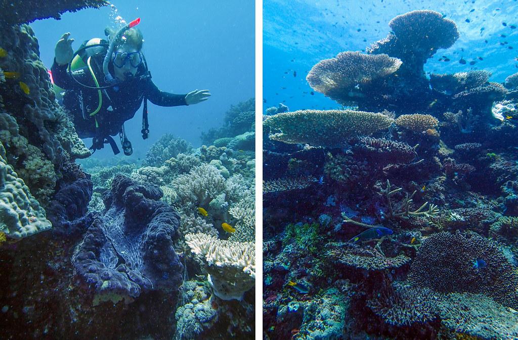 dykning på verdens største koralrev i Australien
