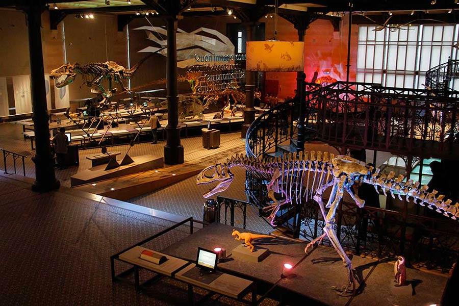 Naturhistorisk museum i Bruxelles