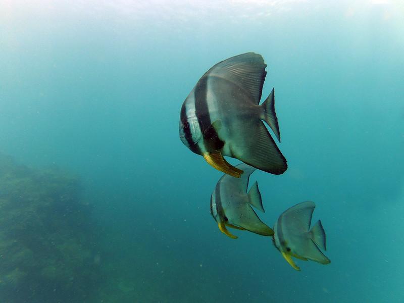 dykning i Vietnam