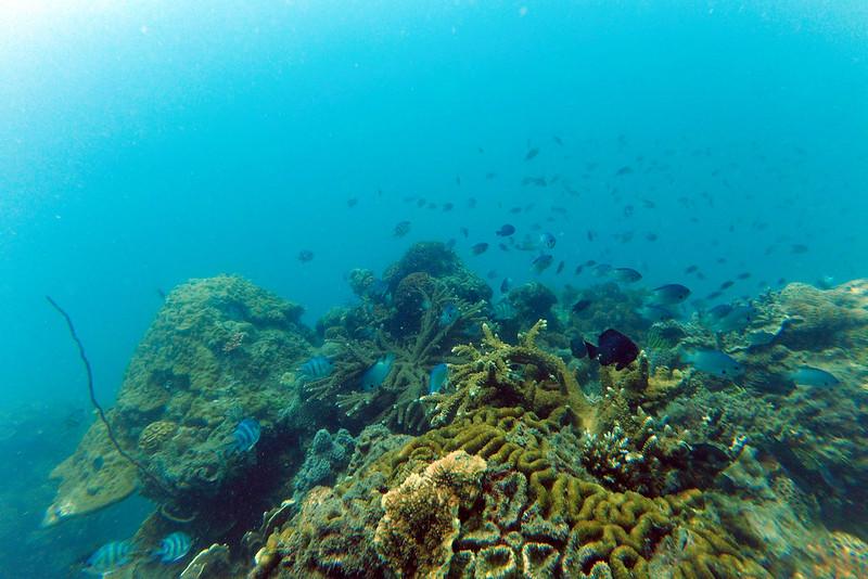 koraller vietnam