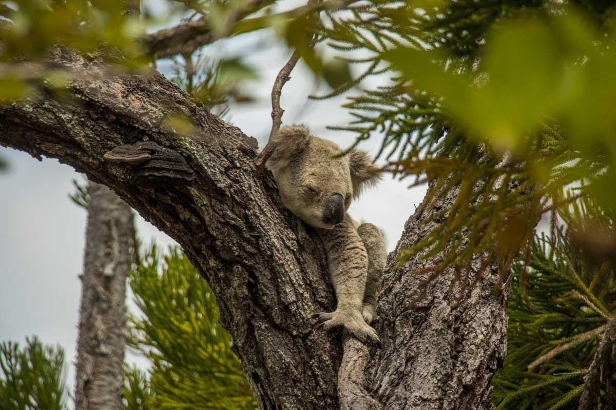 Rejseguide til Magnetic Island, Australien