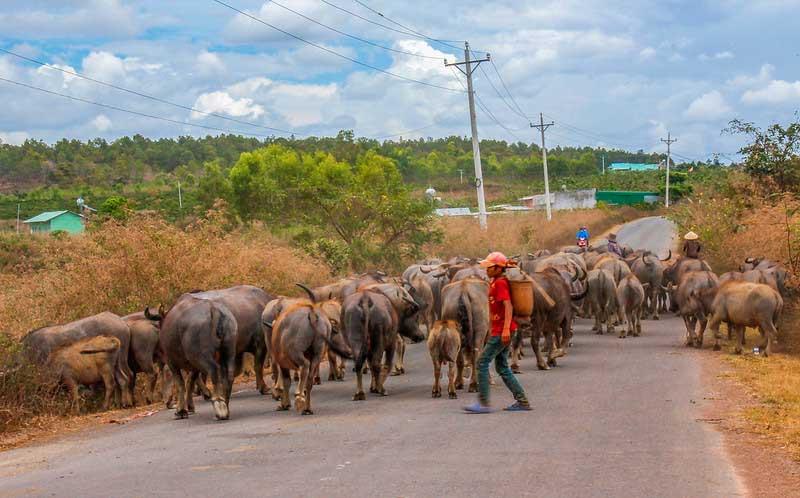 trafikprop i Vietnam