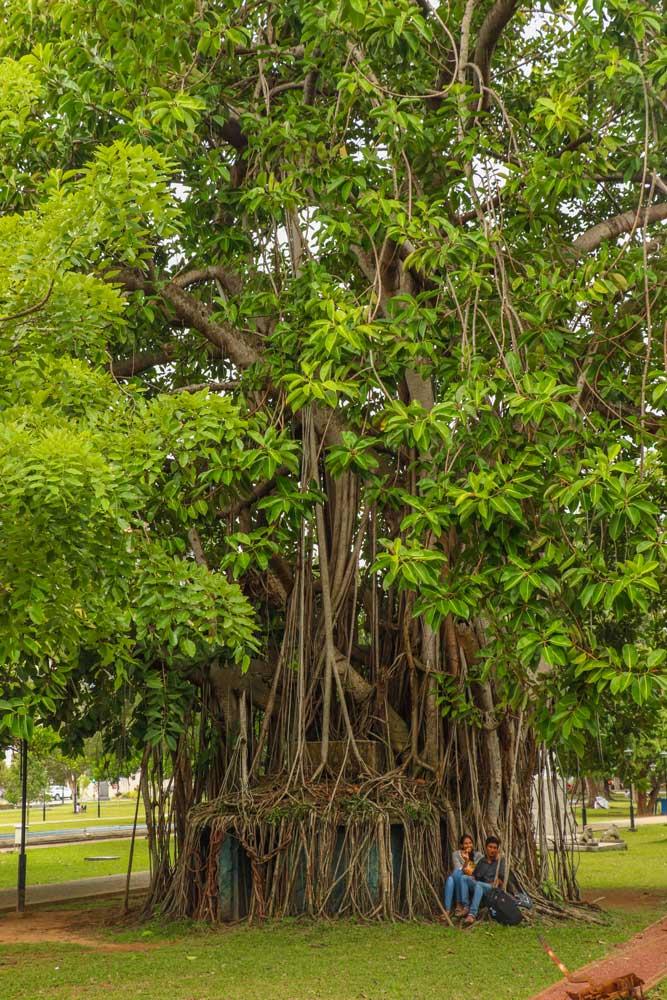 park, Colombo, Sri Lanka