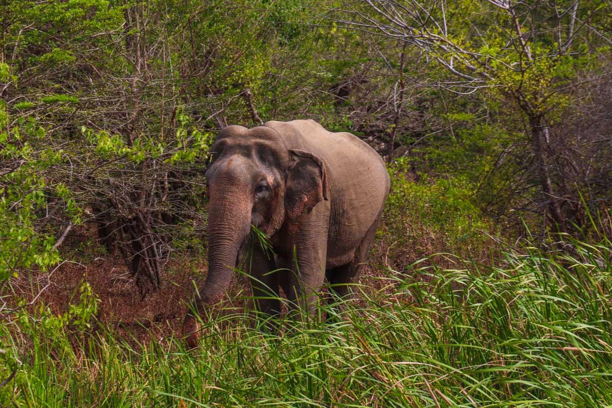 """Seværdigheder"" i Sri Lanka, som du skal undgå, hvis du elsker dyr"