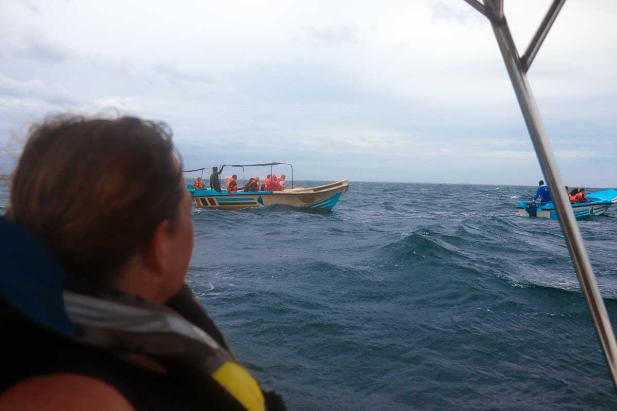 hvalsafari i Sri Lanka
