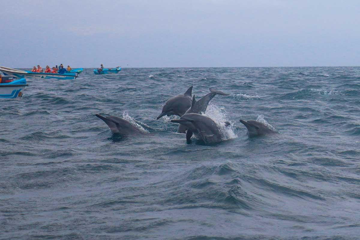 langnæbbede delfiner