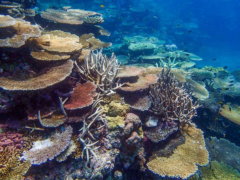 trusler mod verdens koralrev
