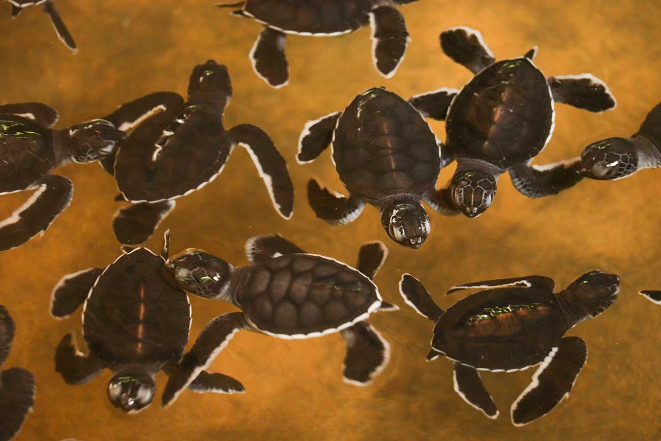 skildpaddeunger