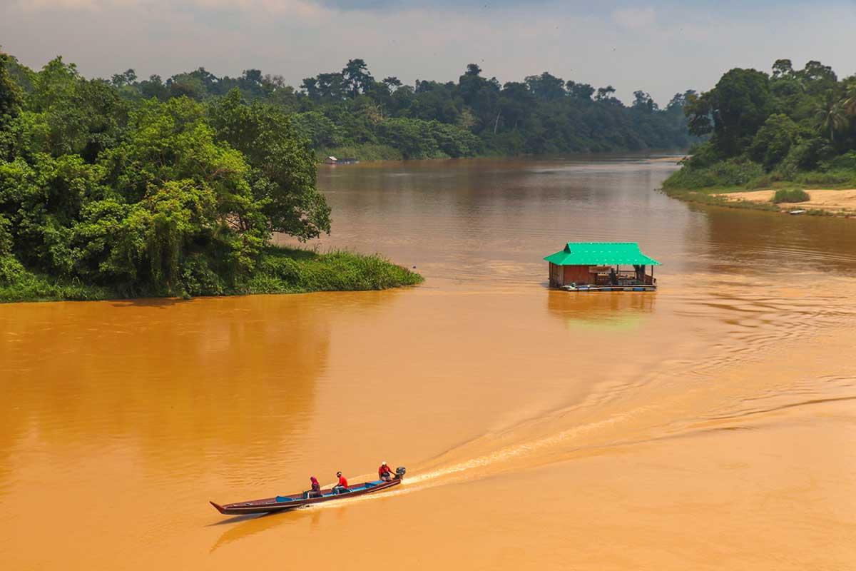 Taman Negara – På eventyr i en af verdens ældste regnskove
