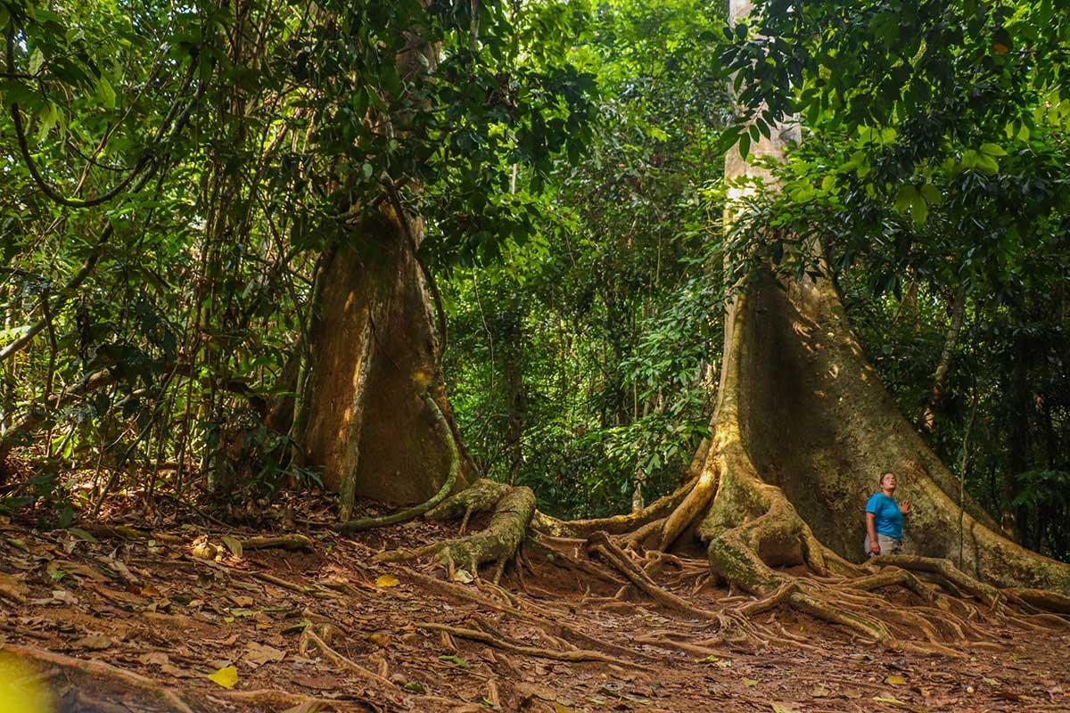 verdens ældste regnskov