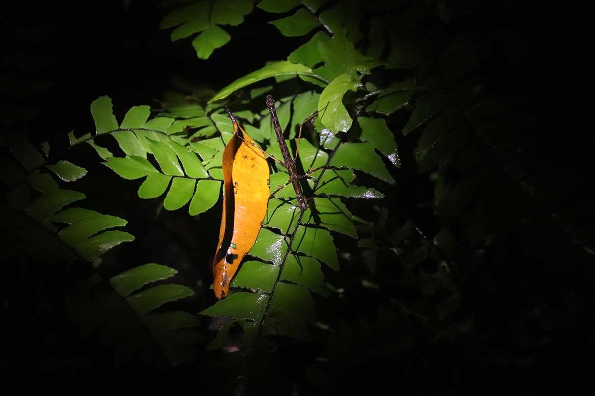 night safari malaysia