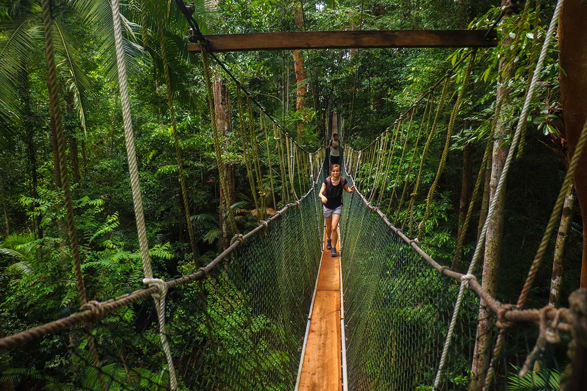 canopy walkway, taman negara, Malaysia