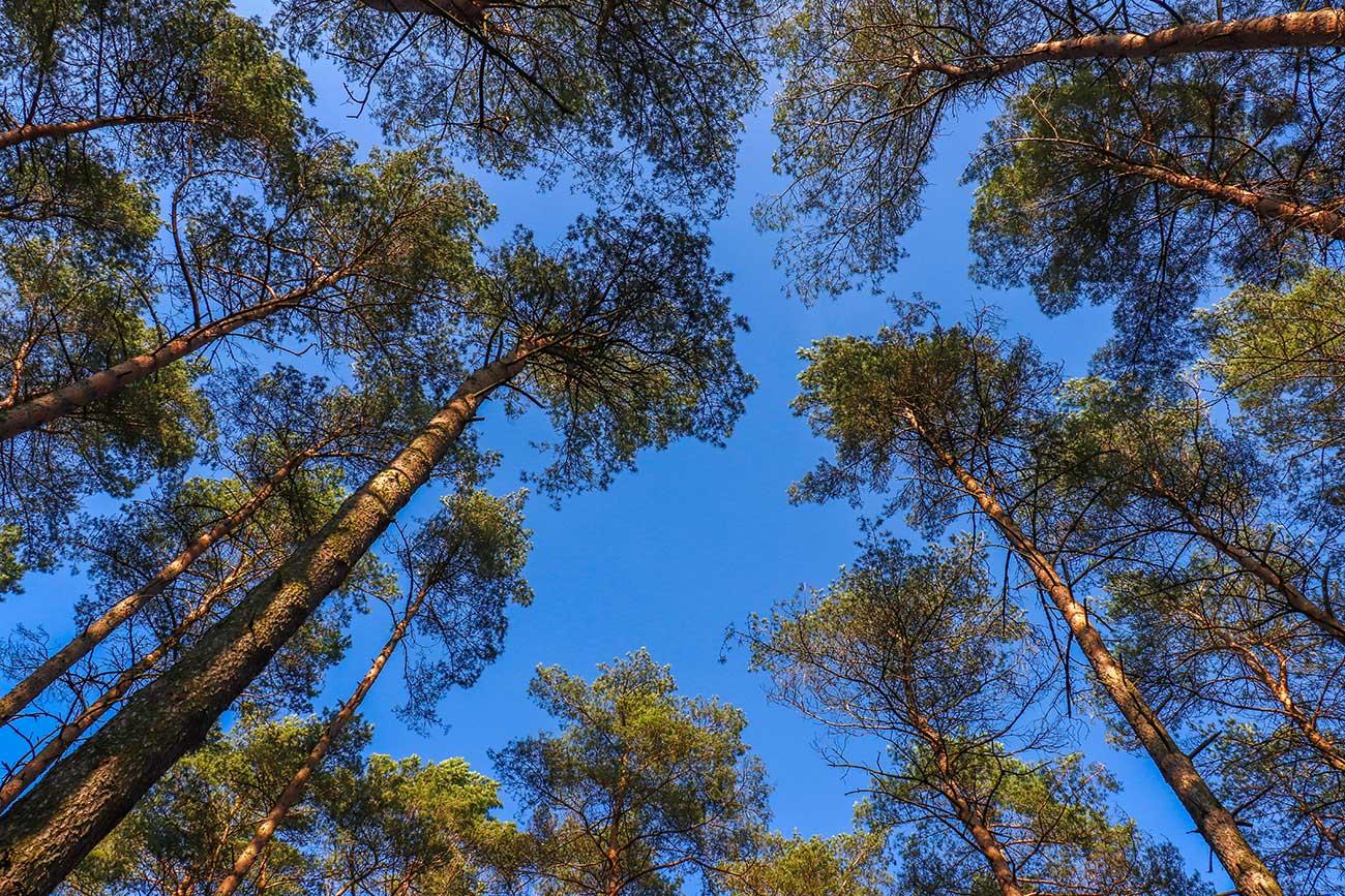 træer tyskland