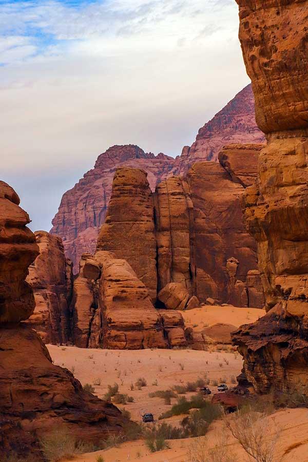 fugl i Wadi Rum