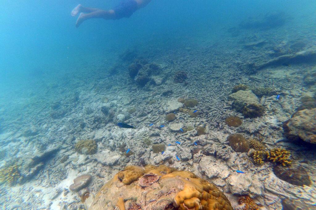 døde koraller, filippinerne