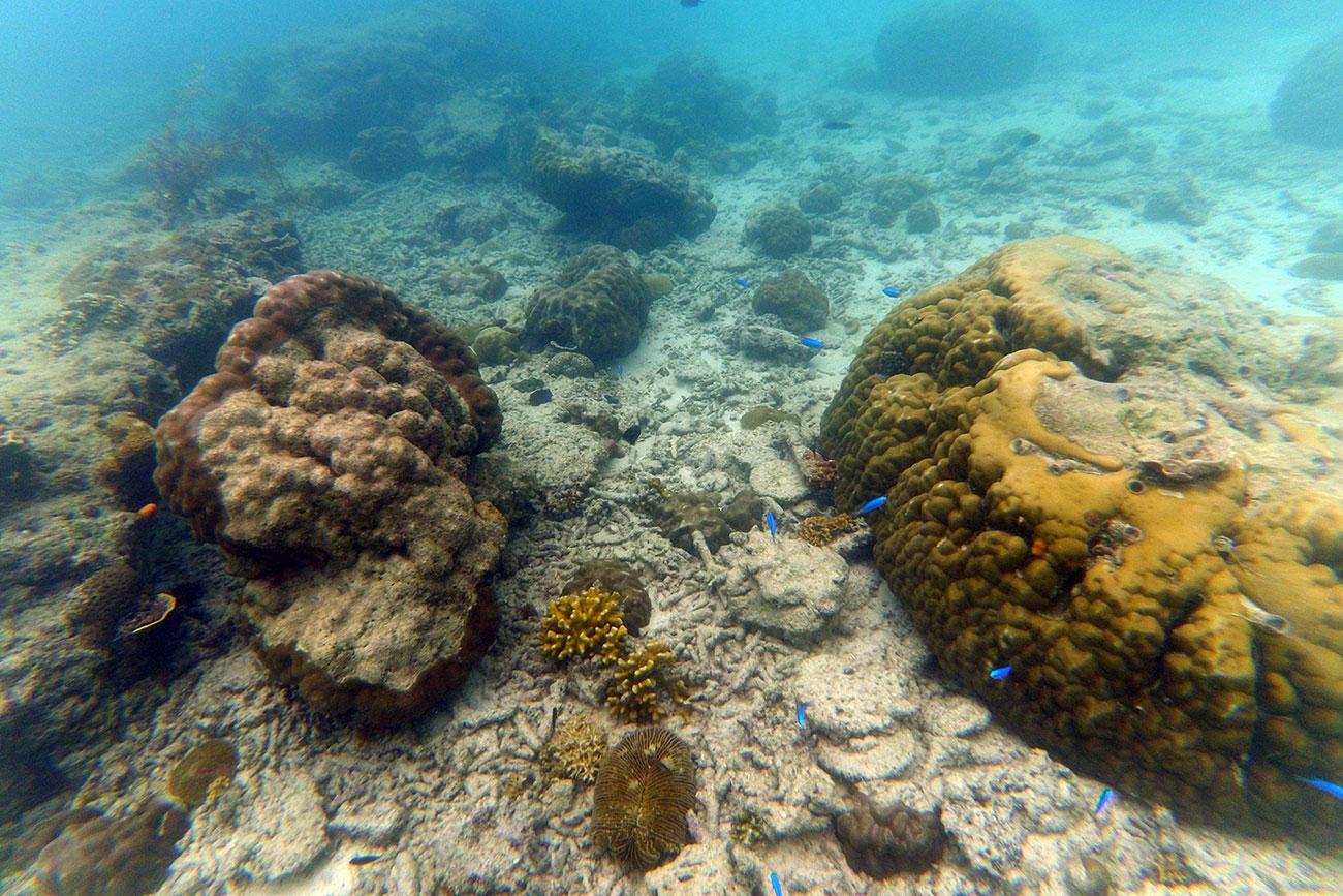 koraller, filippinerne