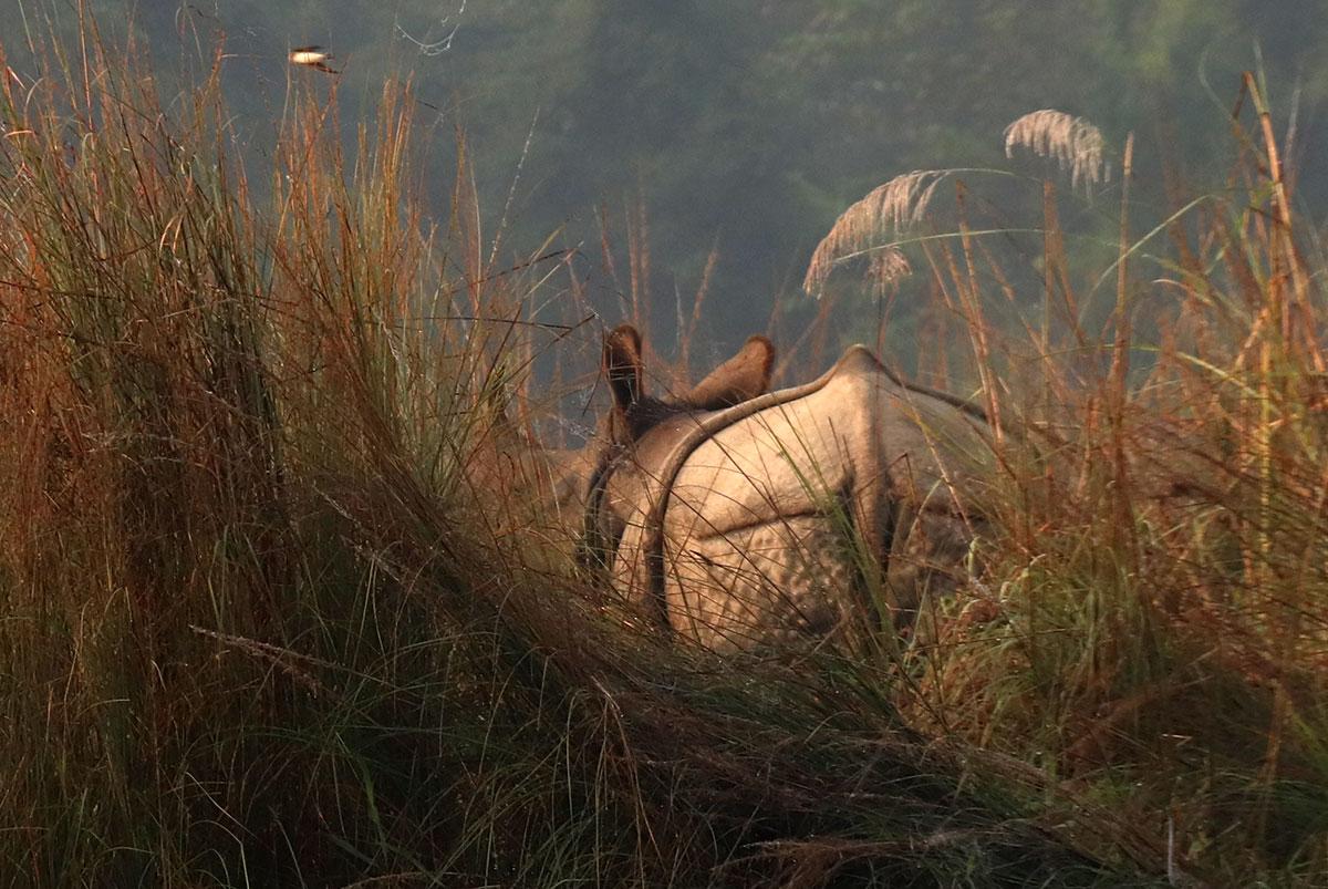 næsehorn i nepal