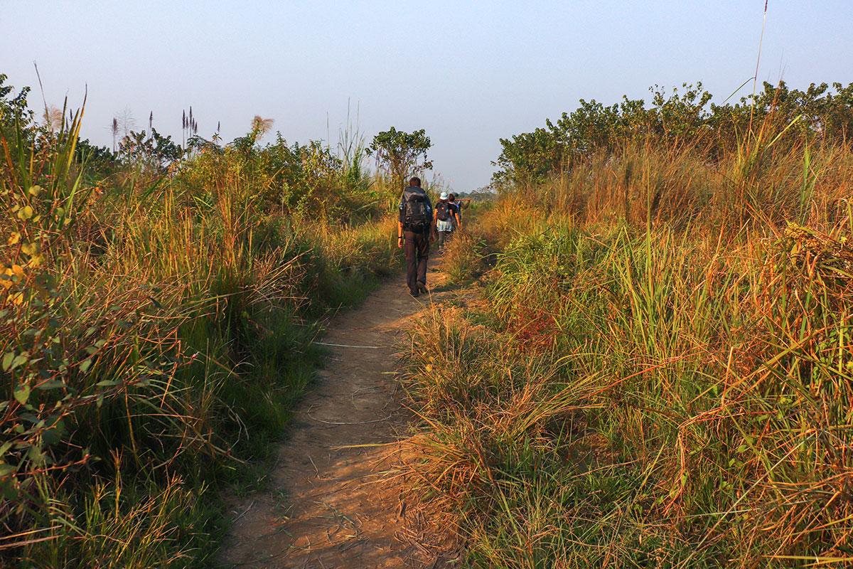 jungle i nepal