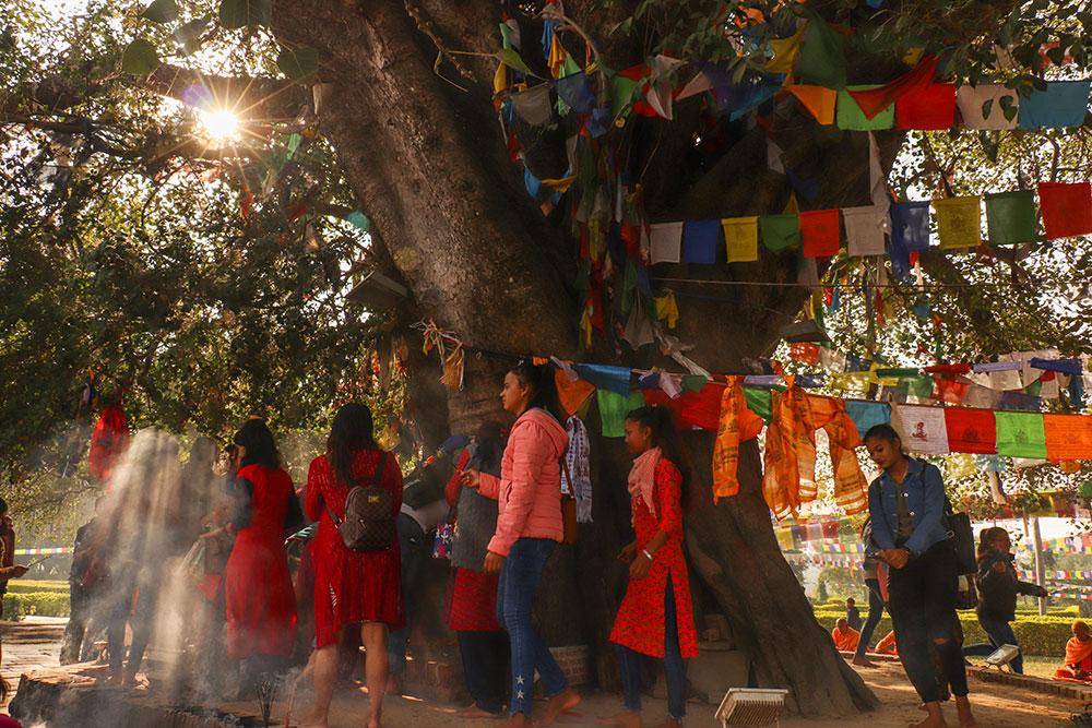 træet ved Queen Mayadevi Temple, Lumbini