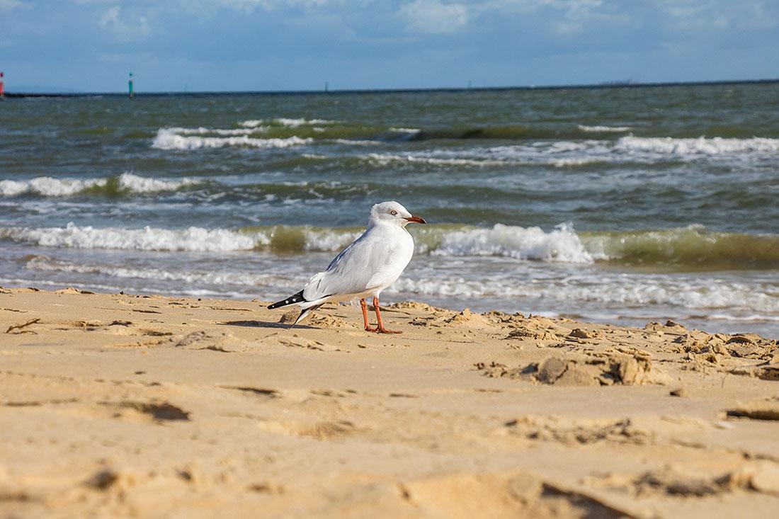 må på st. kilda beach, melbourne