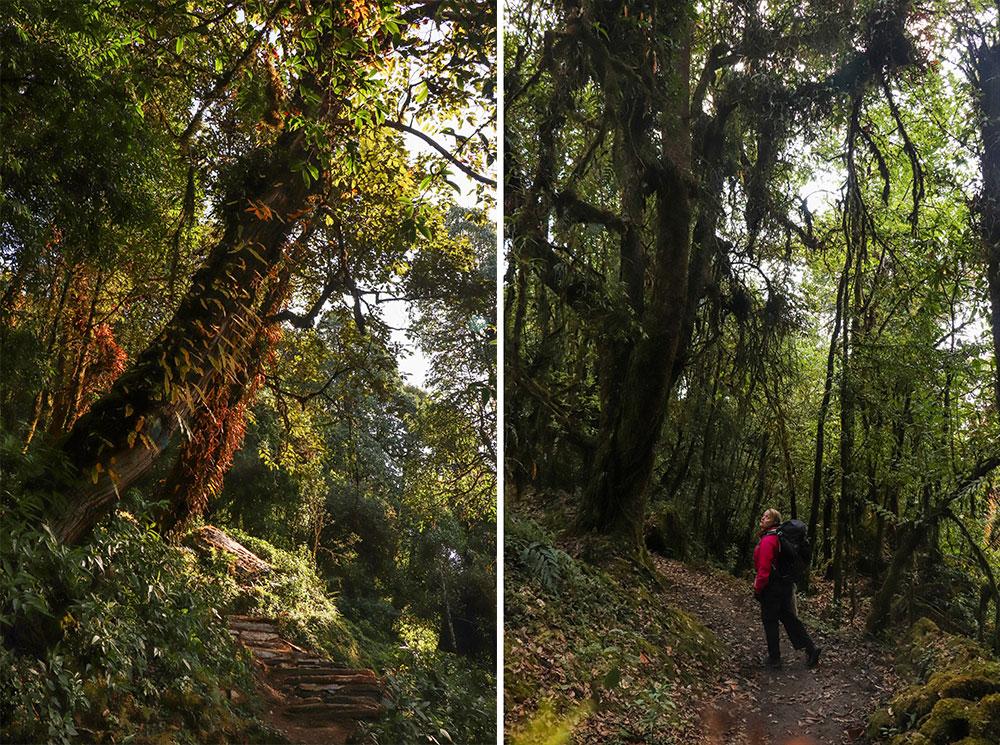 skov i nepal
