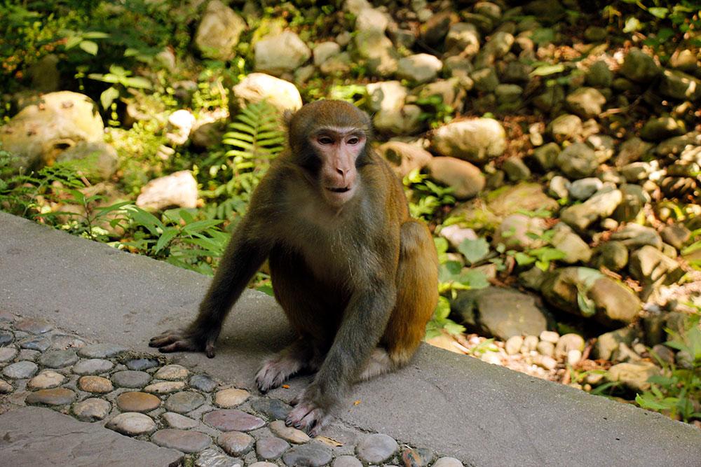 abe i zhangjiajie national forest park