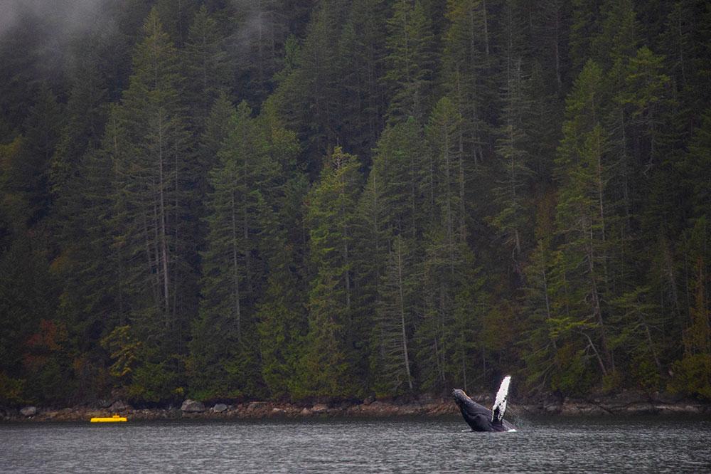hval, vancouver island, canada