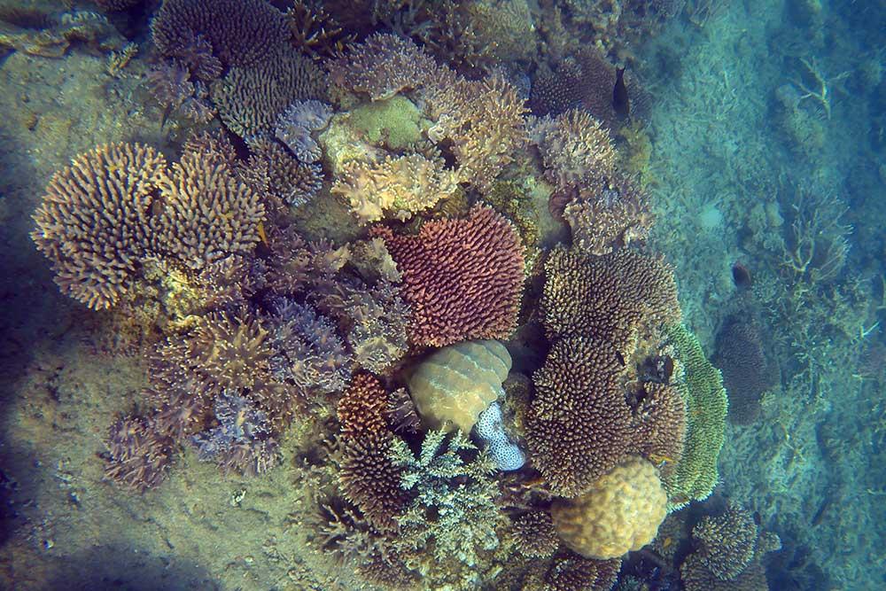 koralrevet ved Fitzroy Island