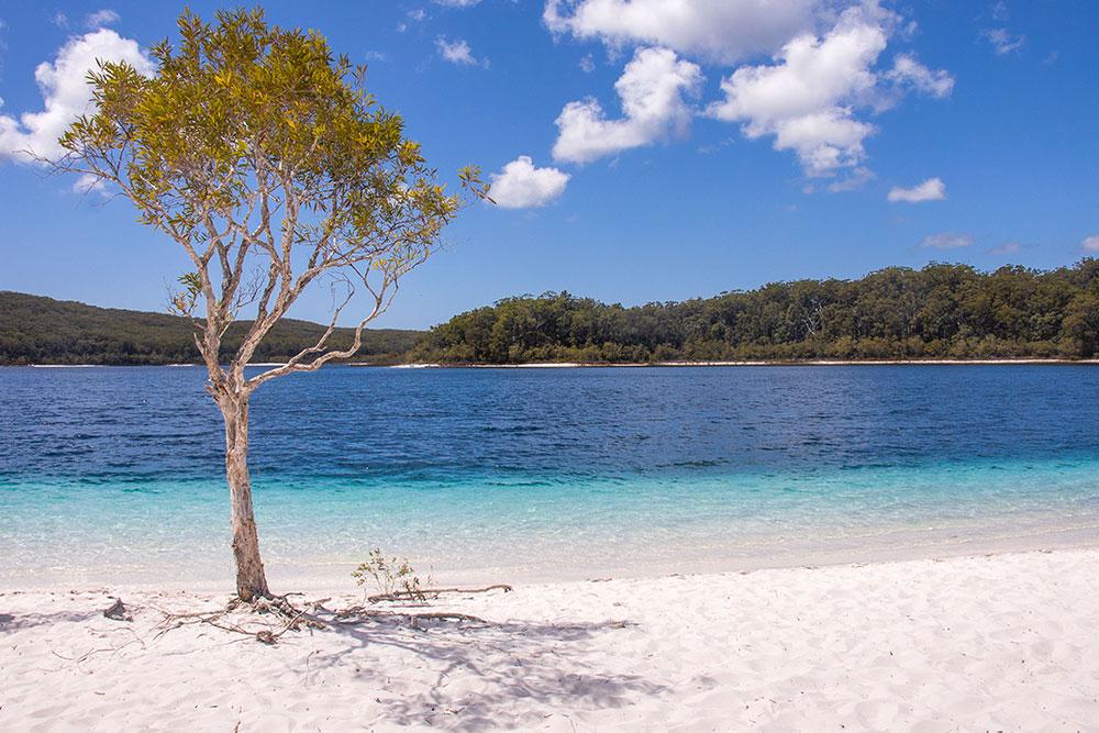 lake mckenzi